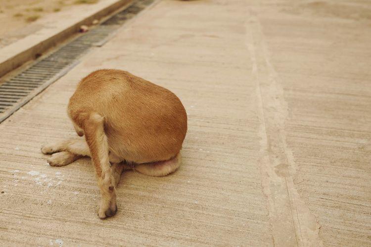 High angle view of dog sleeping on hardwood floor