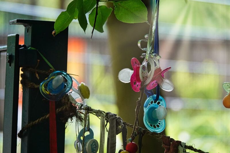 Toy Pacifier Baby No People Focus On Foreground Plant Close-up Leaf Plant Part Day Outdoors Hanging Creativity