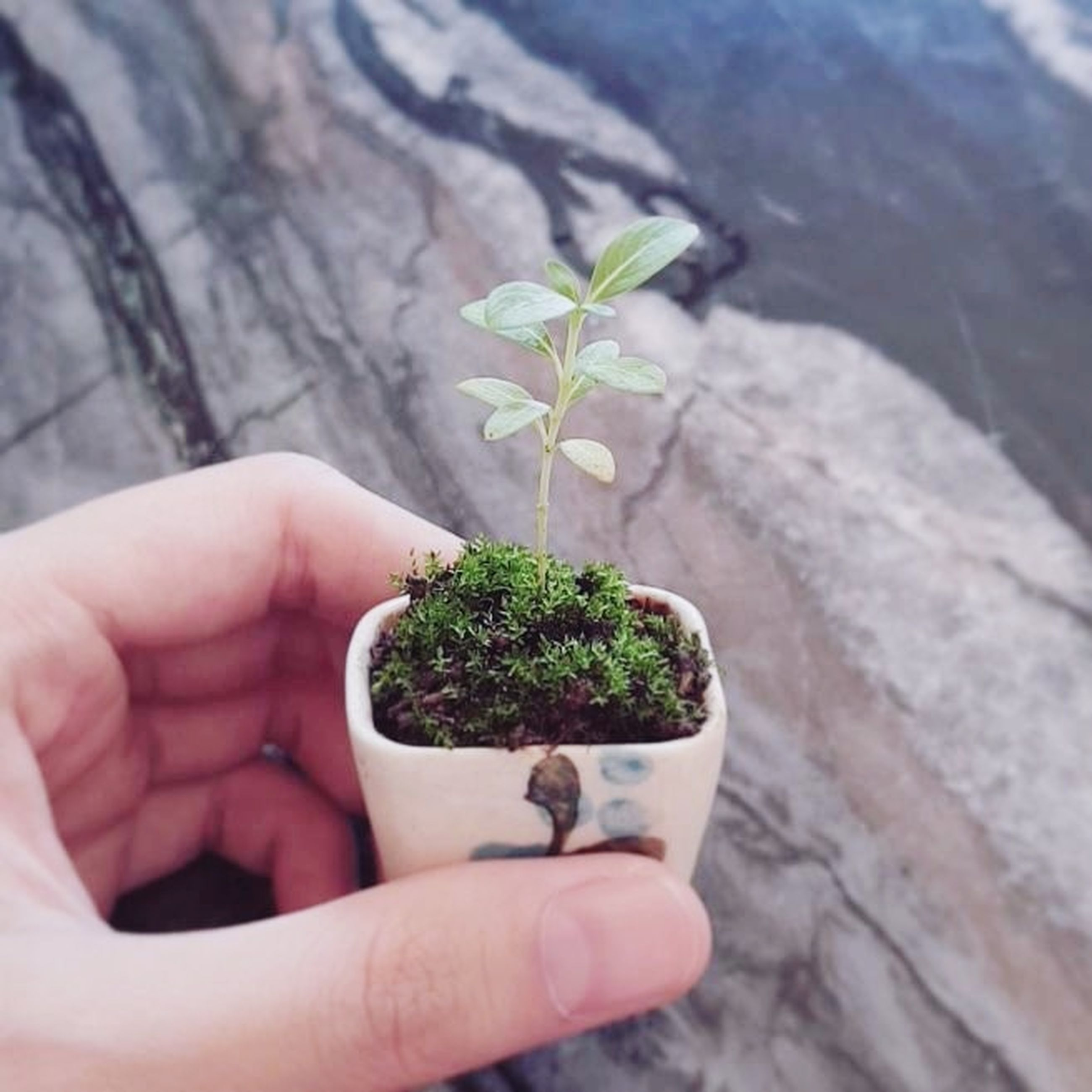 human hand, hand, holding, human body part, plant, growth, beginnings, nature, one person, leaf, close-up, plant part, seedling, care, dirt, new life, fragility, green color, botany, outdoors, small, sapling, gardening, planting, finger