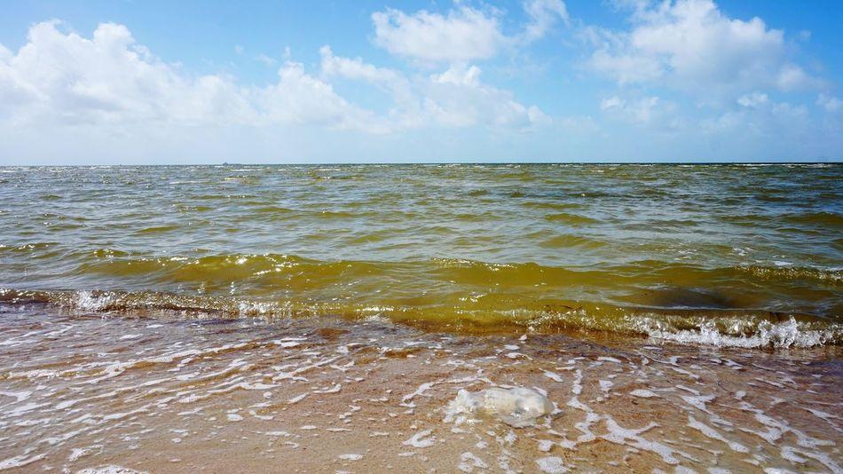 Ways Of Seeing Water Low Tide Wave Sea Beach Horizon Sand City UnderSea Blue Tide Jellyfish Tentacle Swimming Aquarium Koi Carp School Of Fish Swan Coast Coastal Feature Seaweed Algae Seascape Surf Sea Life Coral Underwater Floating In Water Reef