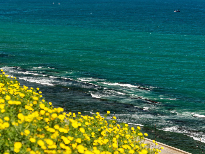 Beauty In Nature Yellow Sea Nature Land Water Day Flower No People Plant Flowering Plant Scenics - Nature Growth Outdoors Beach High Angle View Tranquility Tranquil Scene Freshness
