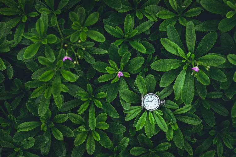 High angle view of pocket watch amidst plants