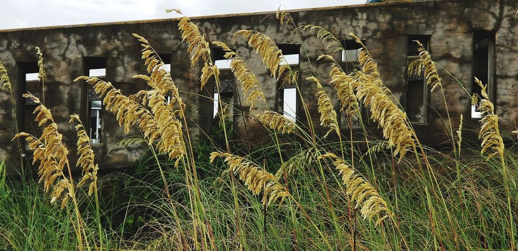 Note 8 Note 8 Photography Wrightsville Beach NC Wrightsvillebeachnc Wrightsville Beach NC Ncphotography NCPhotographer Sea Grass Architecture Close-up Grass