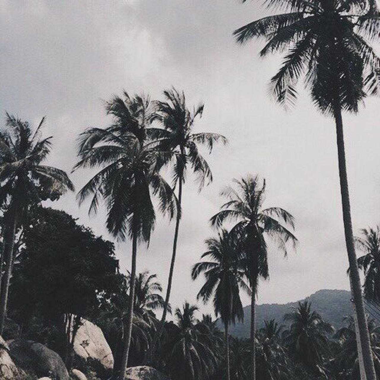 palm tree, tree, tree trunk, tropical climate, nature, low angle view, beauty in nature, tranquility, silhouette, sky, growth, outdoors, scenics, tranquil scene, beach, day, no people, sea, adventure