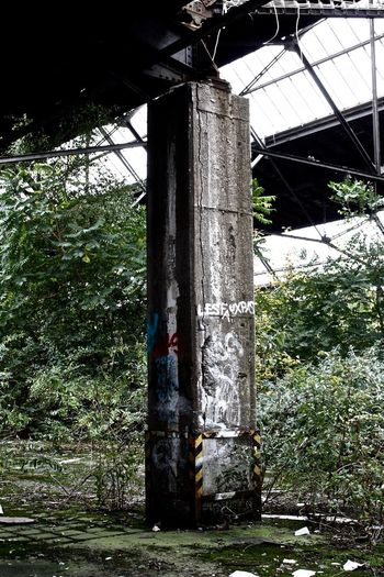 Standsicher Urban Lostplaces Concrete Pillar Gewächshaus Greenhouse Stützen Day No People Built Structure Architecture Growth Low Angle View Outdoors Nature Plant