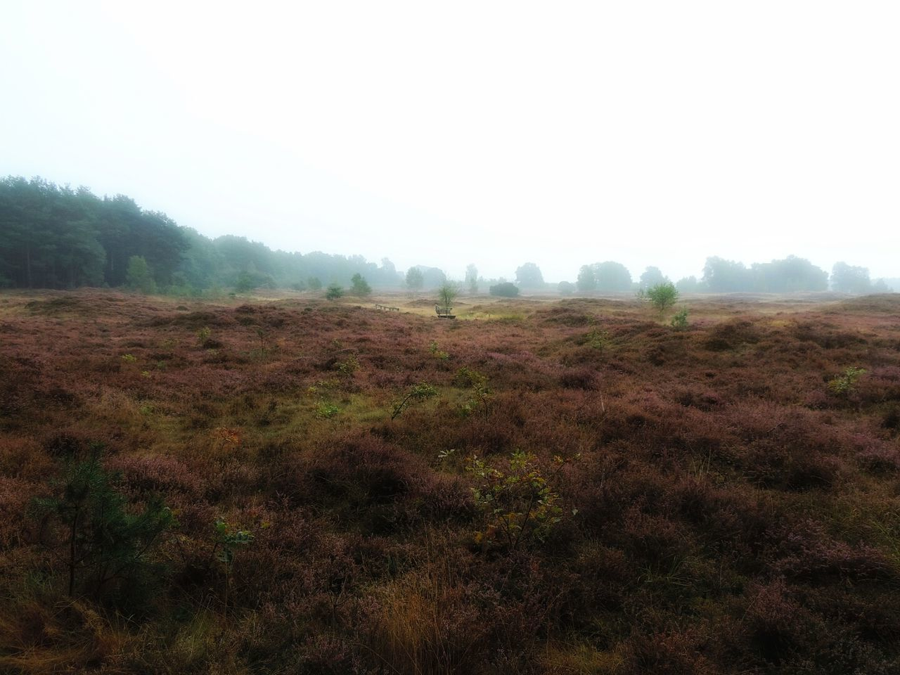 nature, tranquility, beauty in nature, tranquil scene, landscape, field, scenics, no people, day, outdoors, fog, grass, tree, sky