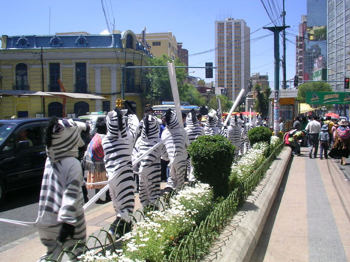 people marching in zebra clothings Local City On A Hill Cultures Day Food Microfinance People Stories From The City
