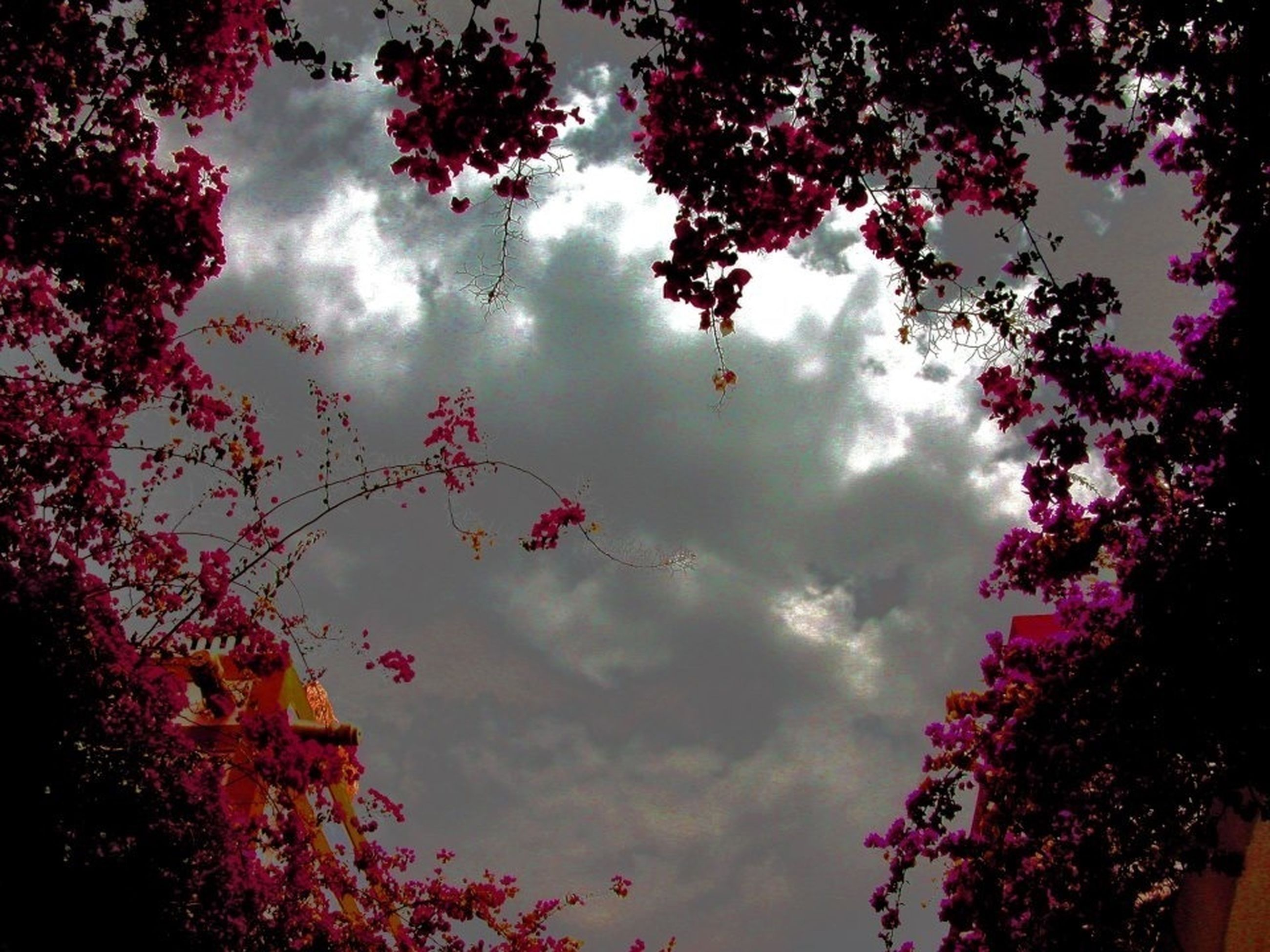 tree, low angle view, sky, pink color, cloud - sky, beauty in nature, growth, nature, branch, flower, cloudy, built structure, outdoors, architecture, building exterior, dusk, cloud, high section, no people, overcast