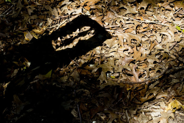 Shadow of a trail marker at Cedar Ridge Preserve. Hikingadventures Hiking Photography Open Edit For Everyone