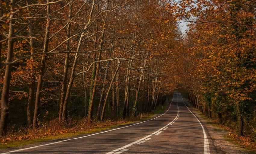 Tree corridor