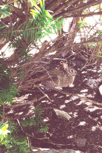 Rabbit Plant Tree Sunlight Nature