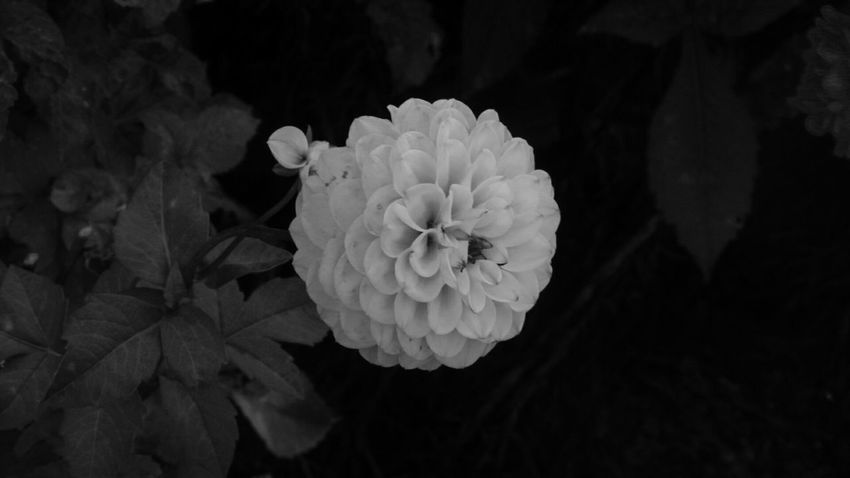 Flower Yellow Dahlia Wimpole Hall, Walled Garden National Trust 🇬🇧 October2017🍂🍁💛 Autumn October Wimpole Estate
