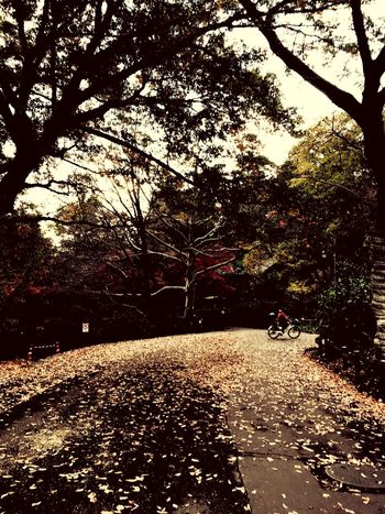 Tree Transportation Outdoors The Way Forward Day Land Vehicle Nature Road Beauty In Nature Real People One Person Sky Inokashira Park