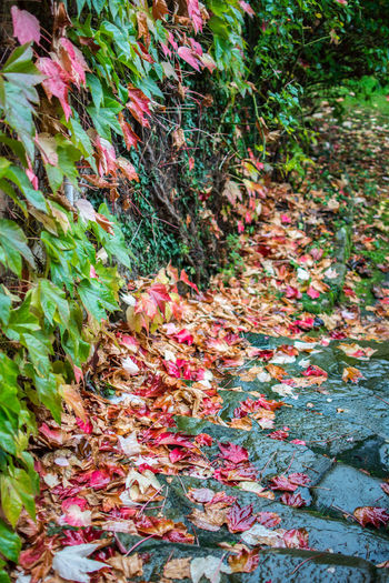 Autumn Plant Leaf Nature Plant Part Growth No People Day Land Autumn Beauty In Nature Flower Field Multi Colored Flowering Plant Change Outdoors Tranquility Close-up Abundance Falling Leaves Natural Condition Autumn Mood
