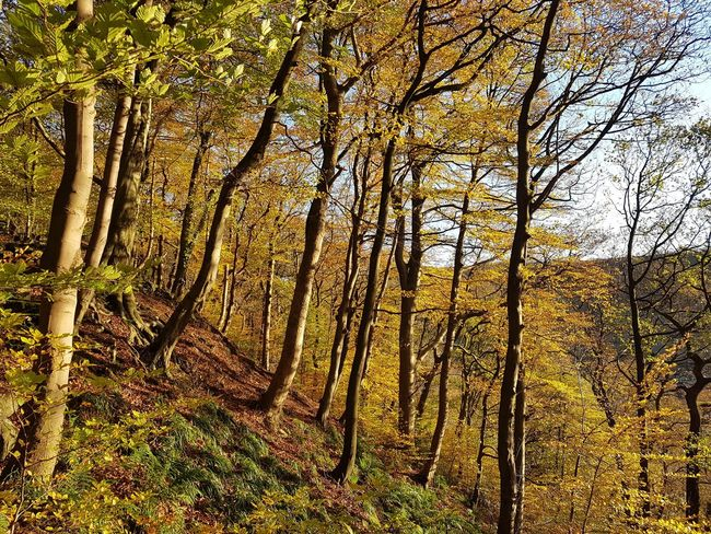 Forest Autumn Calderdale Eaves Wood Mytholm Yorkshire Autumn Leaves Branch Beauty In Nature Tree Outdoors Tranquility WoodLand Tree Trunk Landscape Beauty In Nature Tree Trunk Scenics Nature Full Frame
