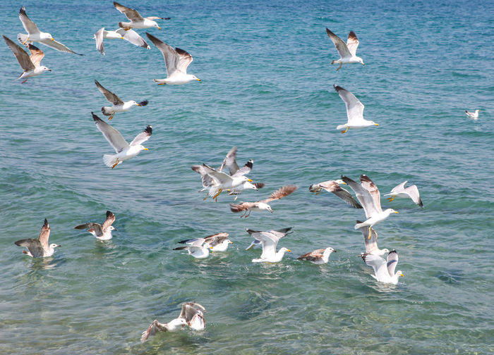 Seagulls Flying Over Sea On Sunny Day Animal Themes Group Of Animals Animal Wildlife Animals In The Wild Animal Vertebrate Large Group Of Animals Water Bird Flying Flock Of Birds Sea No People Seagull Day Nature Spread Wings Mid-air Beauty In Nature Flapping