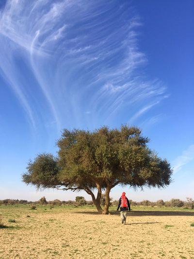 Rear View Of Backpack Man Walking Towards Tree On Field Against Sky
