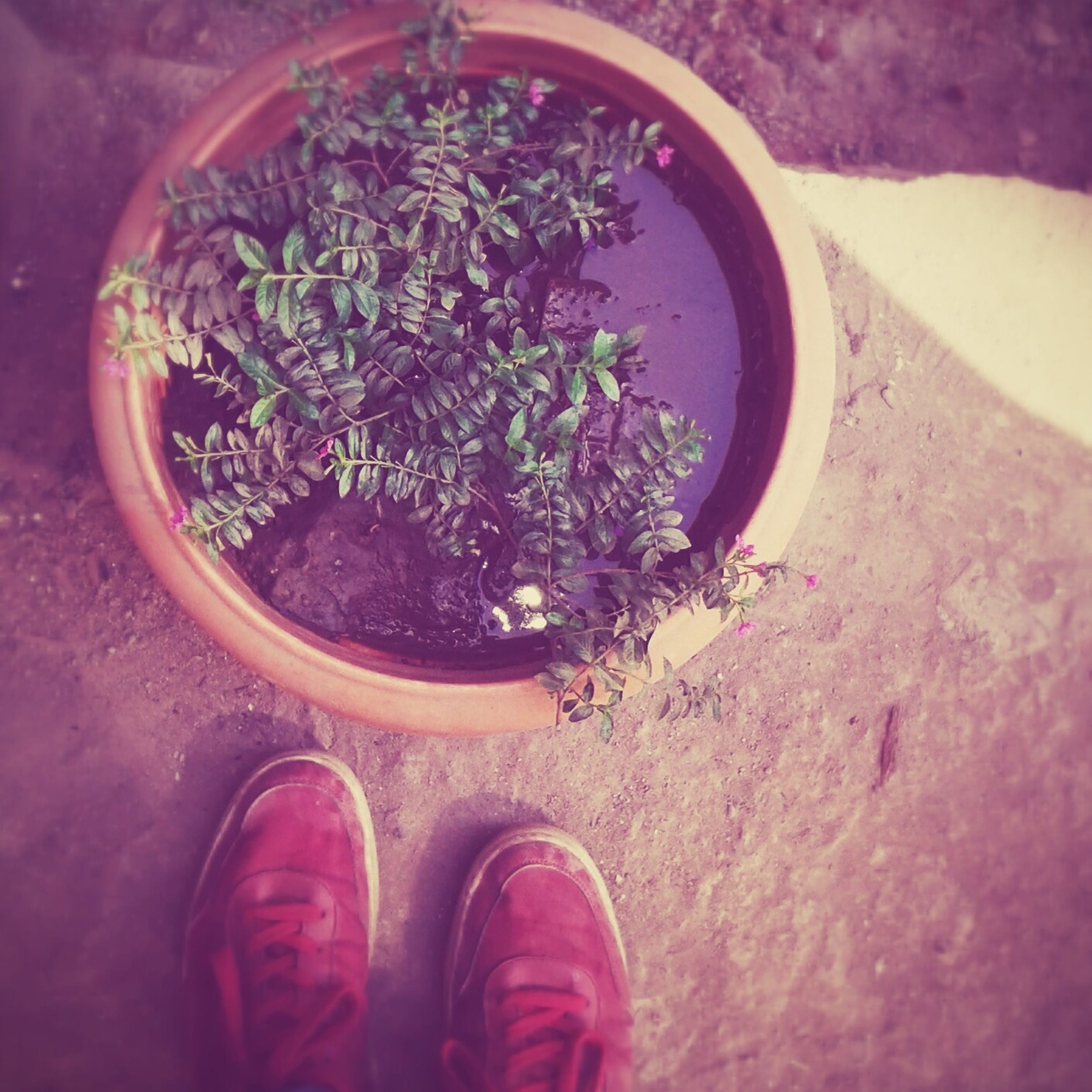 low section, shoe, person, personal perspective, high angle view, human foot, footwear, part of, directly above, plant, flower, leaf, potted plant, unrecognizable person, day, nature, outdoors