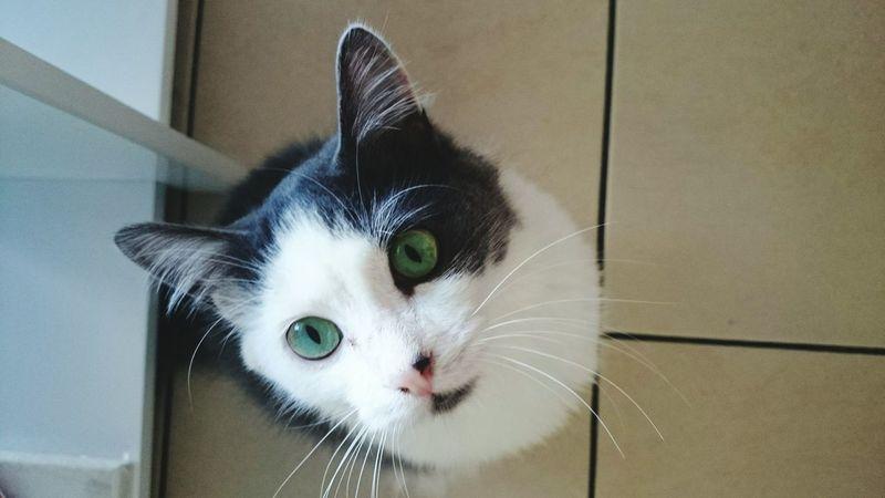Green Eyes Cat♡ Cat Lovers Eyes Cats Popular Photos Catoftheday Chats Cat Cat Eyes