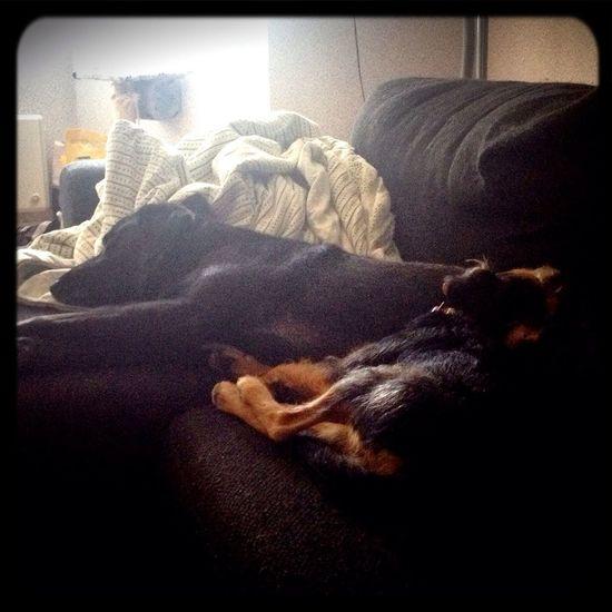 Tierddog  Lovemydogs Sleep Time Mydogs