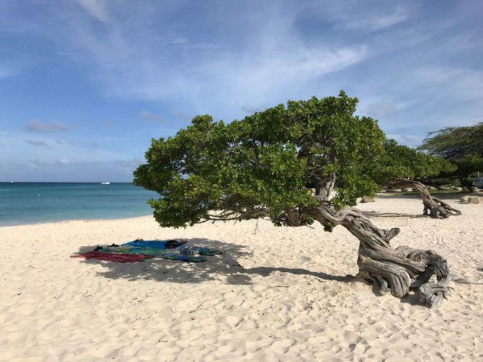 Divi Tree Aruba Relax Travel Island Paradise Idyllic Caribbean Sand Beach Sky Tree Sea Nature Cloud - Sky Scenics Day Water Beauty In Nature Outdoors No People Horizon Over Water