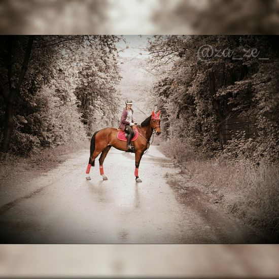 ~ Take it Easy ~ Relaxing Taking Photos Enjoying Life Horse Hello World That's Me Check This Out