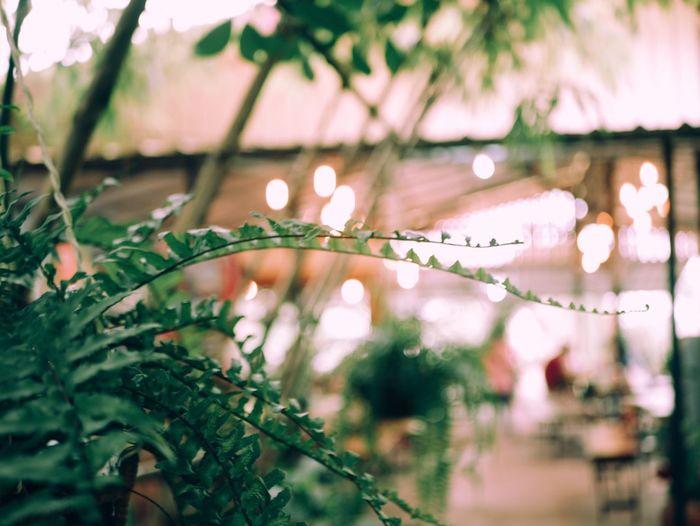 Close-up of illuminated plant against blurred background