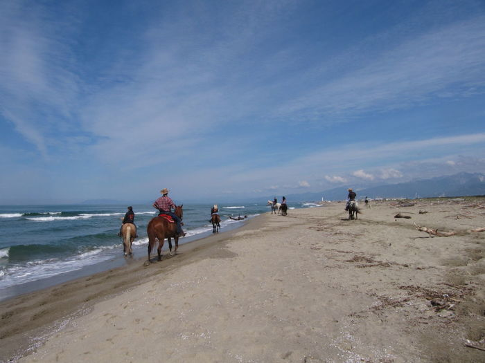 Rear view of horse riding on beach
