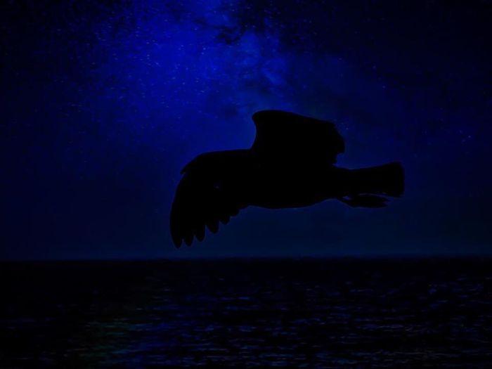 Birds Starry Starry Night Flight Dark