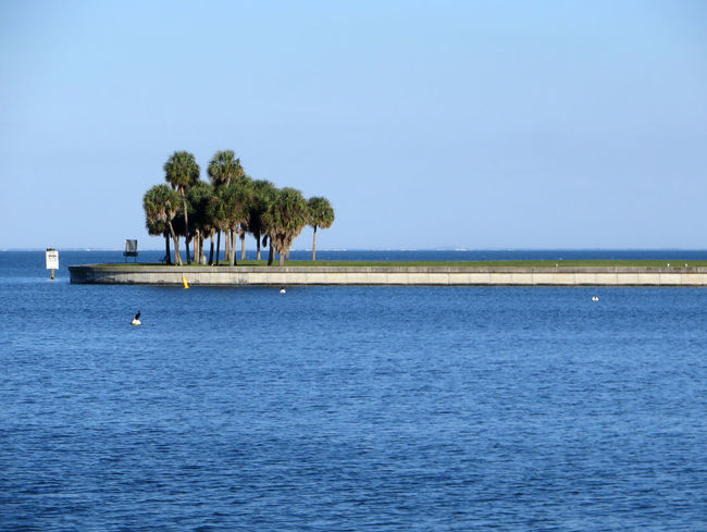 Bunch Of Trees Calm Florida Gulf Coast Gulf Of Mexico Ocean Outdoors Palm Trees Seascape St Petersburg Tranquil Scene Tranquility Water Waterfront