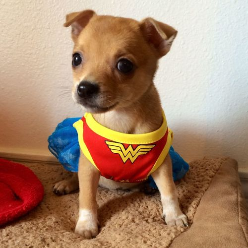 Puppies Dog Costumes Cute Pets Halloween Costumes