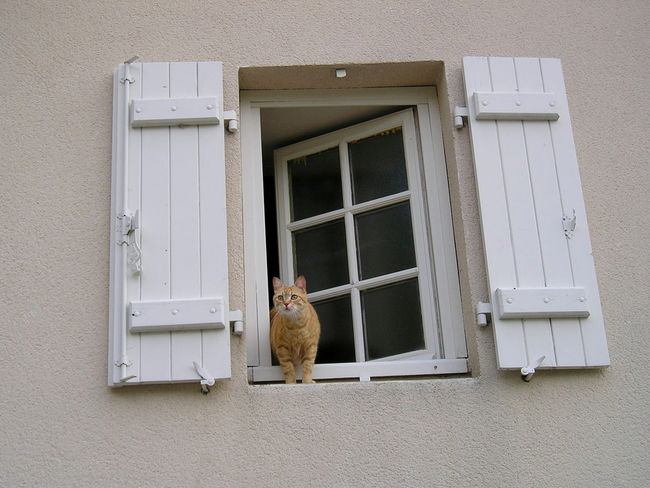 Animal Themes Building Exterior Cat Day Domestic Animals Facade Building Facadelovers Façade Mammal No People Outdoors Pets Red Cat Window