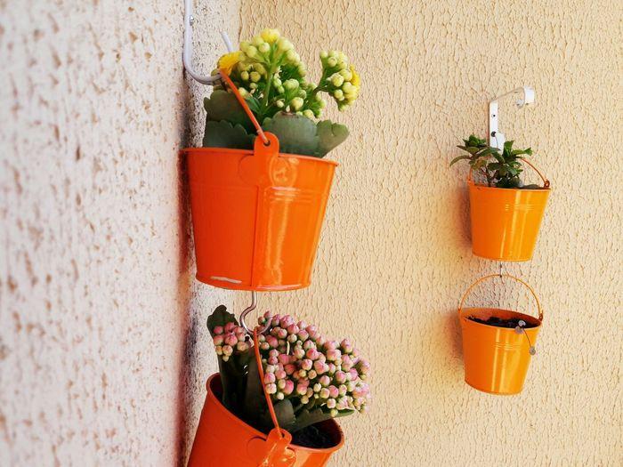 flores Flower Window Box Potted Plant Architecture Plant Built Structure