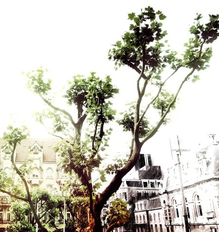 Sketchy City. P260 Onephotoaday IPhoneography Tree No People City Check This Out Leafs Nature In The City Lights Colors White Sky Overexposed IPhone Editing Amsterdam Leidseplein