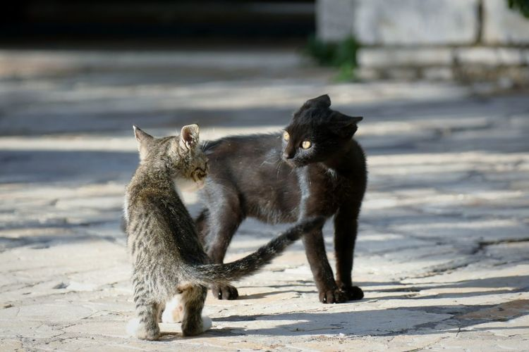 Blicke die töten Animal Animal Wildlife Mammal Outdoors Animals In The Wild Sunlight Nature No People Cat Paw Winter Animal Themes Day Cats Of EyeEm