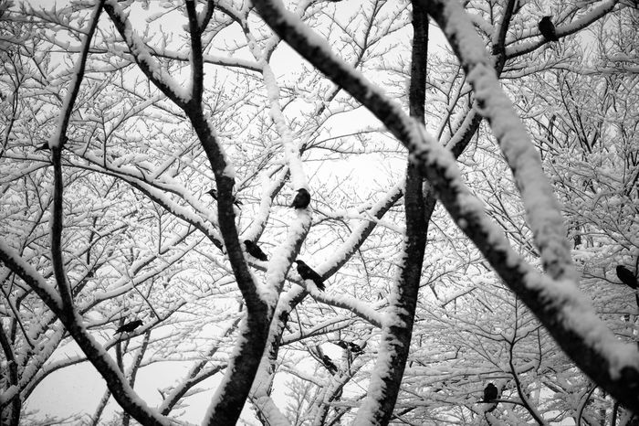 Capture The Moment Black And White Snow Crow Tree Silhouette Low Angle View Nature Animal Themes Animals Tranquil Scene Fine Art Still Life Landscapes Depth Of Field Conposition Animal Wildlife Abstract Full Frame Detail Oldlens Sonnar Zeiss EyeEm Best Shots 17_02 Welcome To Black Resist Art Is Everywhere The Secret Spaces Break The Mold TCPM EyeEmNewHere The Great Outdoors - 2017 EyeEm Awards