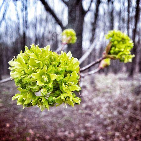 аста цыи Localsmd весна Primavara