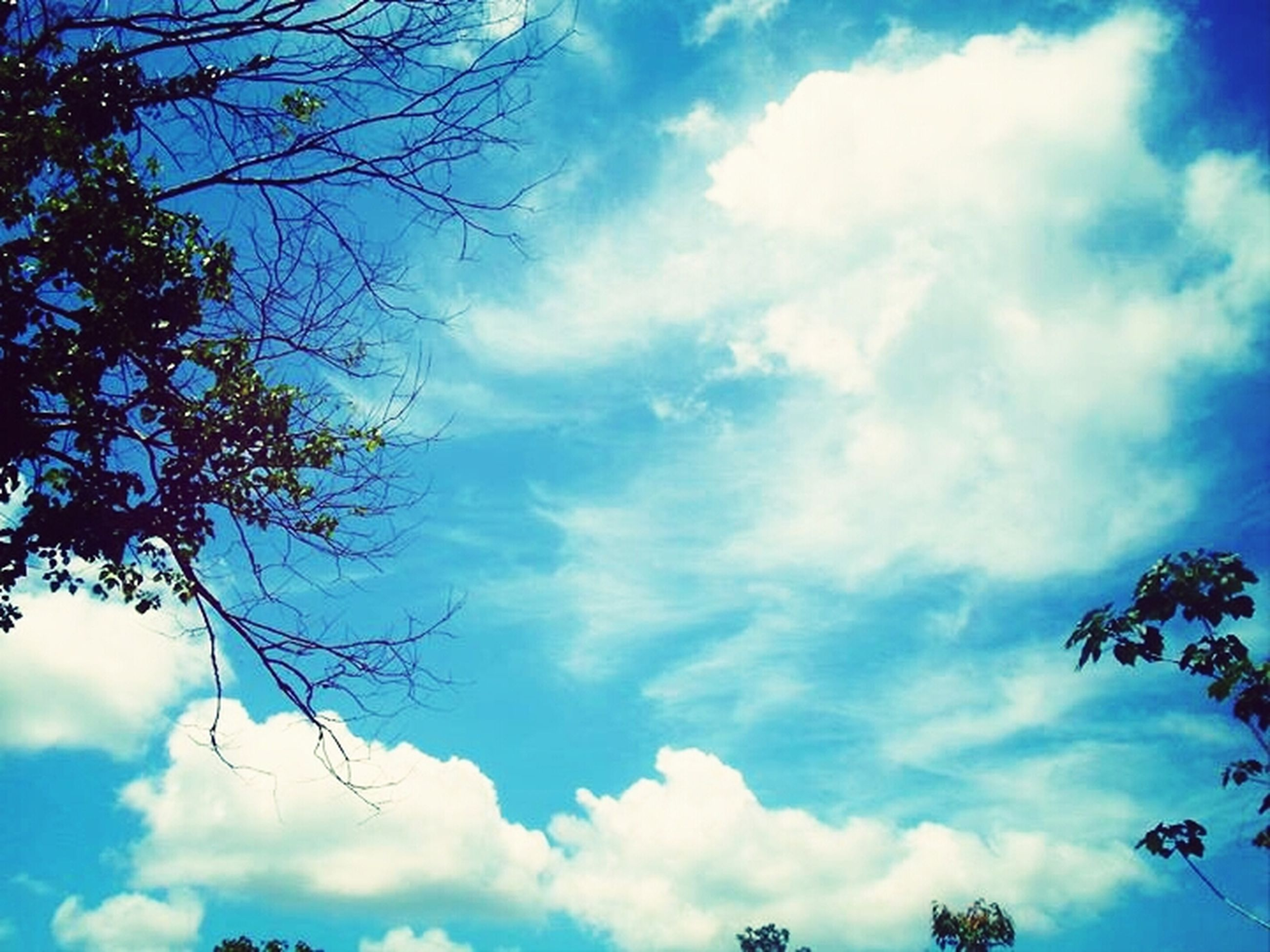 low angle view, sky, tree, cloud - sky, tranquility, beauty in nature, branch, cloudy, blue, nature, cloud, scenics, bare tree, tranquil scene, silhouette, growth, outdoors, no people, day, cloudscape