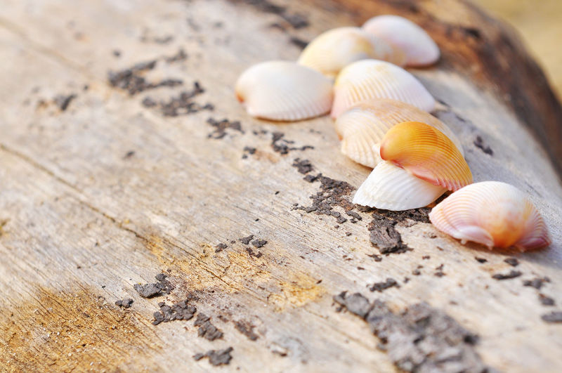 Close-up of clams on wood