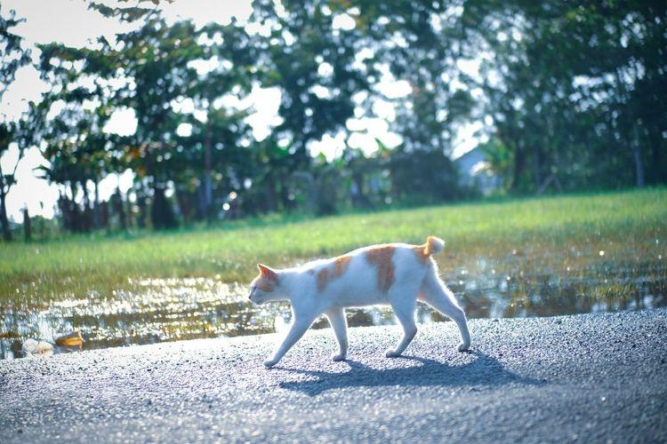 Cat walk in the