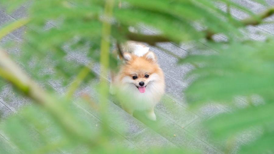 High angle view of a dog