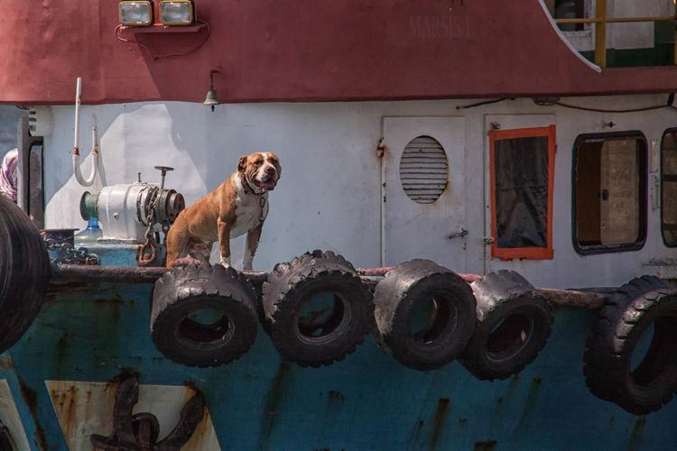 Dog on cropped boat