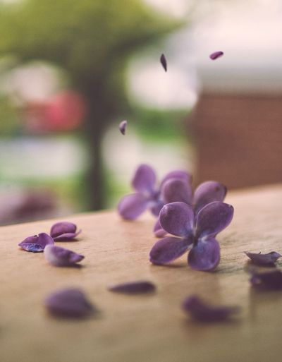 Selective Focus Close-up Freshness Indoors  Flower Table Flowering Plant No People Purple Food Still Life Day Focus On Foreground Petal Nature