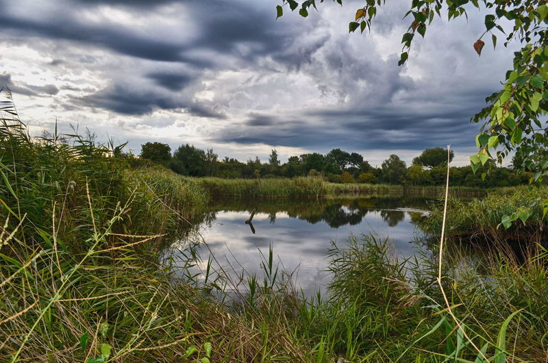 Kleine Teiche - Halle Neustadt Lake Teich