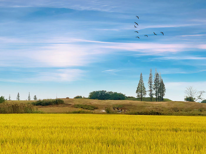 Scenic view of birds on field against sky