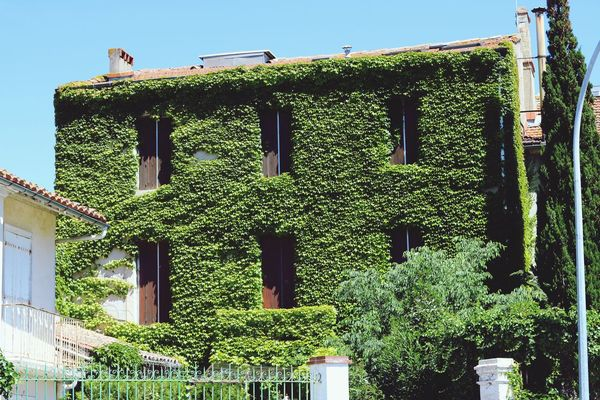 Architecture Built Structure Building Exterior Day Outdoors No People Green Color Plant Ivy Sunlight Low Angle View Growth Tree Nature Animal Themes Sky Carcassone, France France