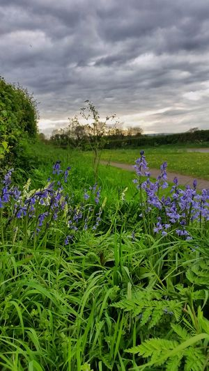 'Bluebells& Whitebellls' By The Roadside........ 🎶 https://youtu.be/sYi7uEvEEmk 🐦 Country Road Springtime April 2017 England 🌹 Beauty In Nature Rural Scene Flowers Of EyeEm Flower Photography Flowerporn Focus On Beauty Flower Collection Eye4photography  EyeEm Nature Lover Malephotographerofthemonth EyeEm Masterclass Mobilephotography Exceptional Photographs Nature_perfection Beauty In Nature Nature Photography Every Flower Is A Soul Landscape_photography
