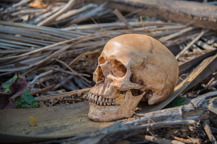 Anatomy Biology Bokeh Lights Dead Education Human Human Skull Safety Skull Skull And Bones Skull Status Skulls Statue Still Life
