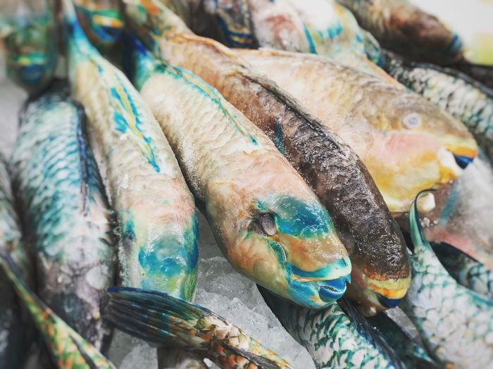 Parrot fish Photography Fish Seafoods Closeup Food And Drink Food For Sale Fish Market Close-up Healthy Eating