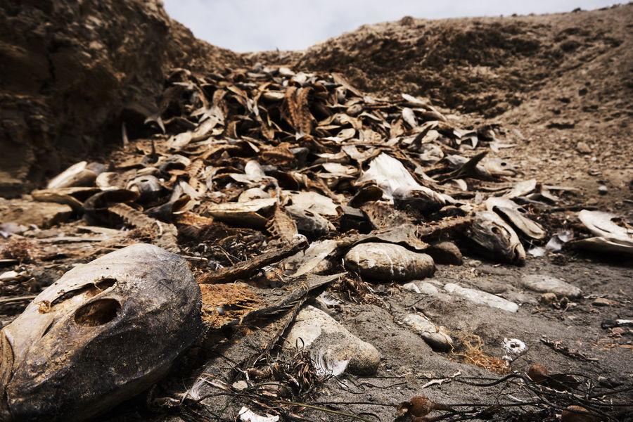 death in the beach Animal Beach Bones Contaminated Nature Death Disaster Fish Rock en Isla Natividad, Mexico